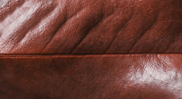 Fundo de textura de folha seca