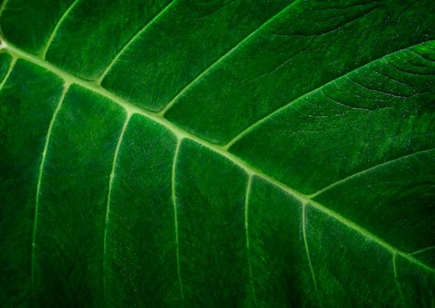Fundo de textura de folha verde abstrato