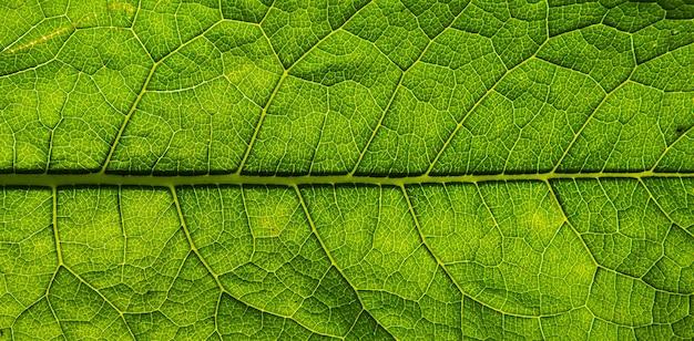 Fundo de textura de folha verde fresca