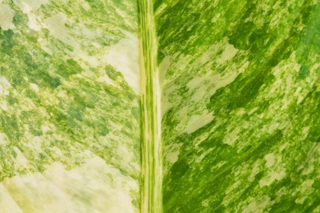 Fundo de textura de folha verde na natureza