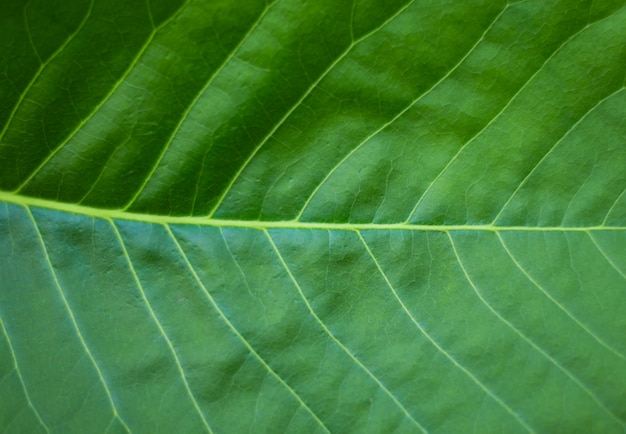 Fundo de textura de folha verde