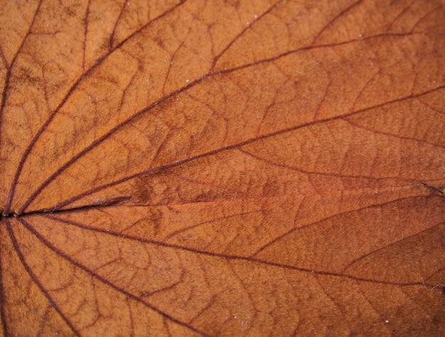 Fundo de textura de folha vermelha