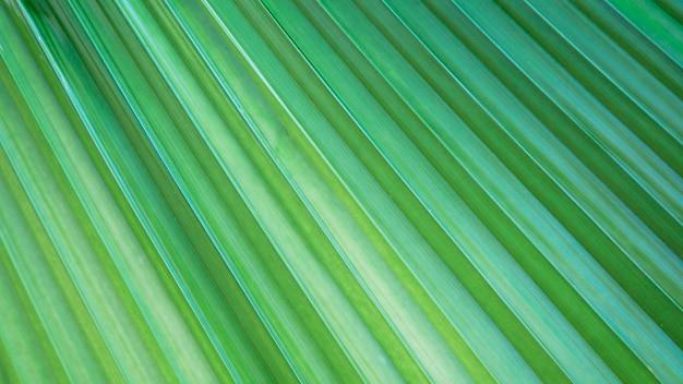 Fundo de textura de folhas tropicais verdes brilhantes