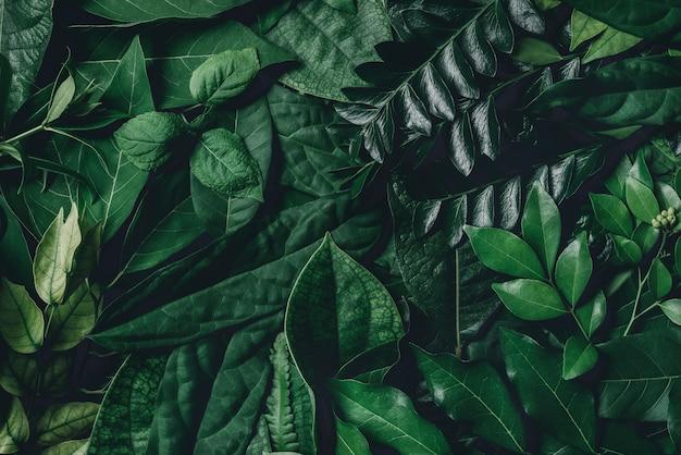 Fundo de textura de folhas verdes abstratas layout criativo para design