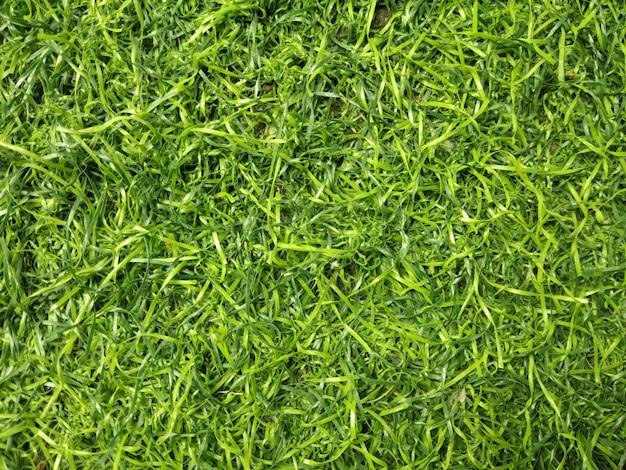 Fundo de textura de grama artificial
