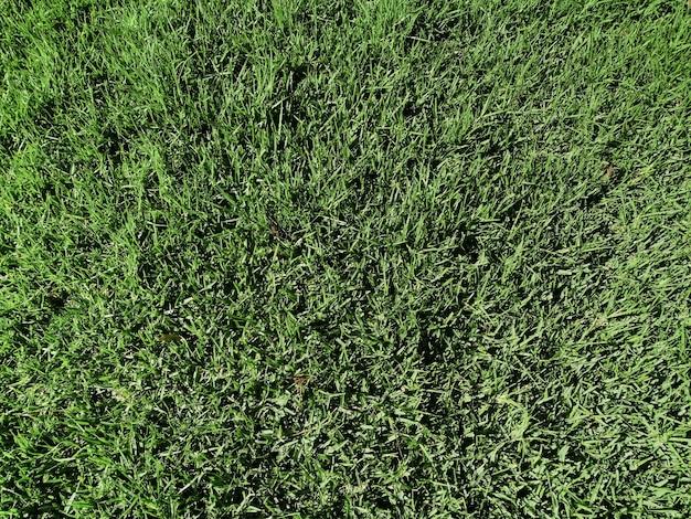 Fundo de textura de grama natural