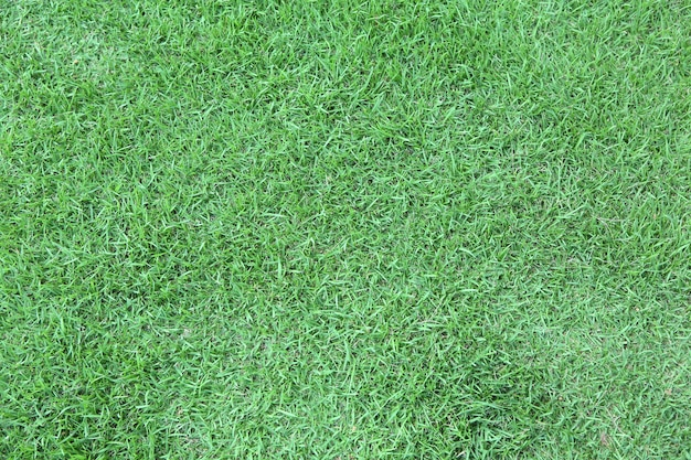 Fundo de textura de grama verde.