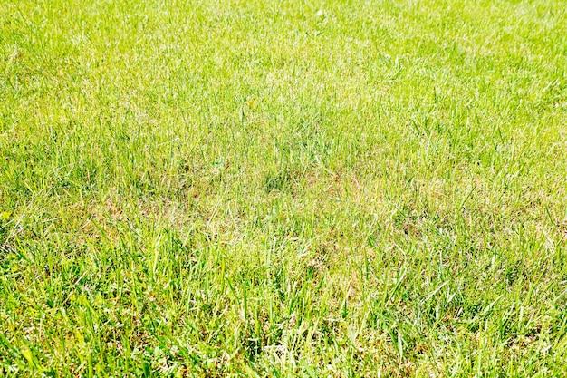 Fundo de textura de grama vívida de verão
