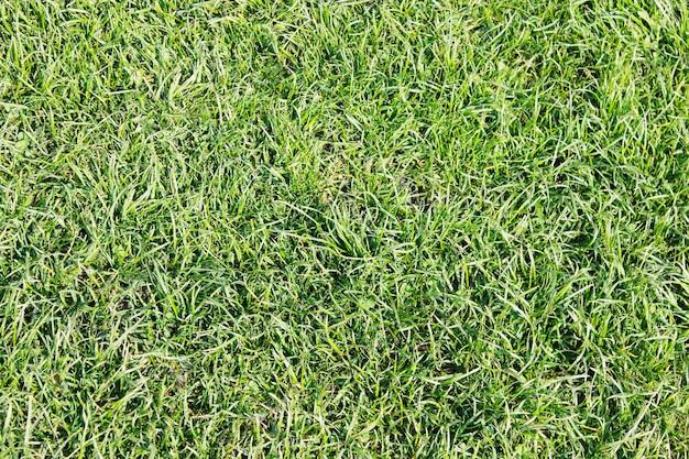 Fundo de textura de grama