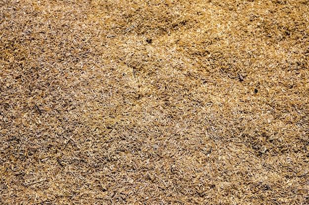Fundo de textura de grão de arroz seco