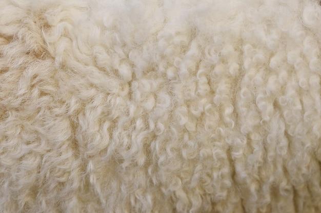 Fundo de textura de lã