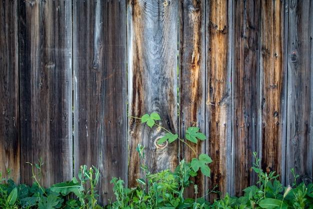 Fundo de textura de madeira, com um galho verde