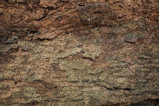 Fundo de textura de madeira de casca