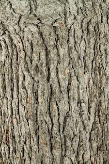 Fundo de textura de madeira de superfície de árvore