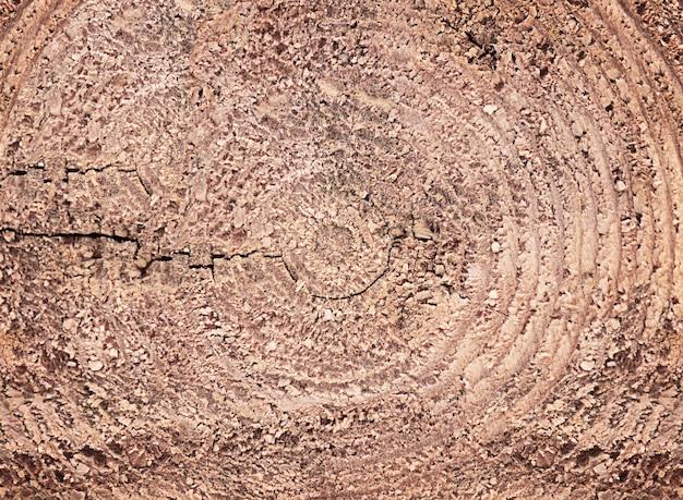 Fundo de textura de madeira fatia de madeira