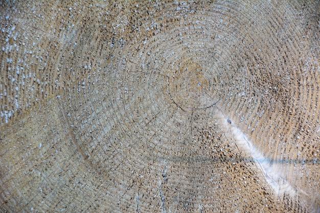 Fundo de textura de madeira madeira serrada de árvore