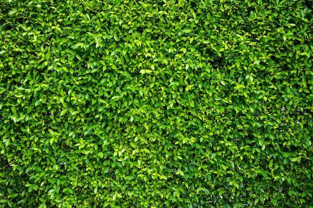 Fundo de textura de parede de folha verde conceito de papel de parede de frescor ambiental