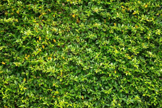 Fundo de textura de parede de folha verde