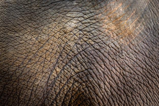 Fundo de textura de pele de elefante