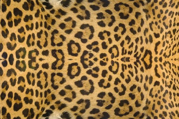 Fundo de textura de pele de onça-pintada, leopardo e jaguatirica