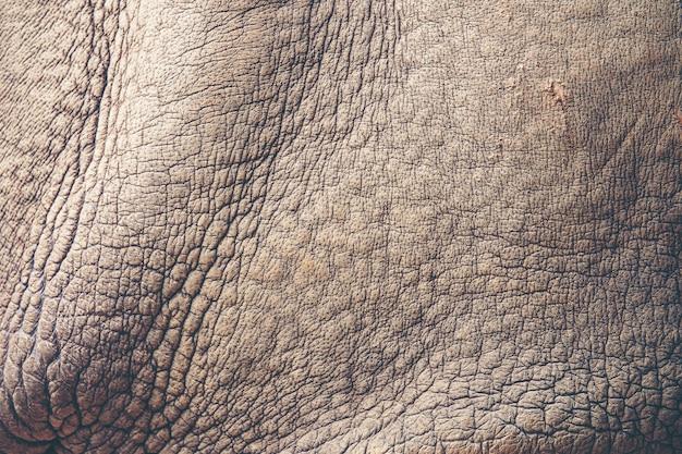 Fundo de textura de pele de rinoceronte
