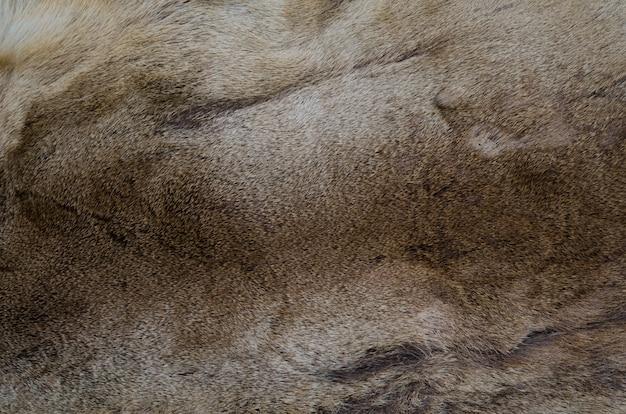 Fundo de textura de pele marrom natural
