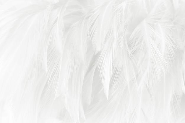 Fundo de textura de penas brancas.