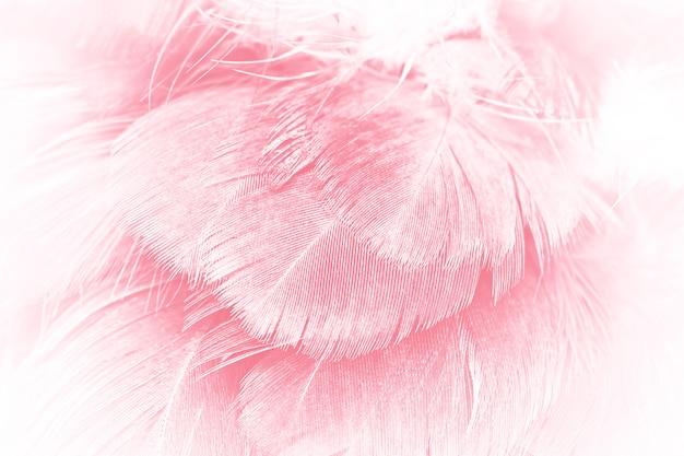 Fundo de textura de penas cor de rosa