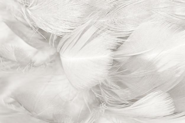 Fundo de textura de penas preto e branco