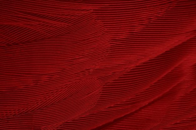 Fundo de textura de penas vermelhas