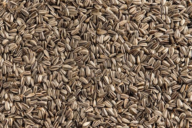 Fundo de textura de sementes de girassol. vista do topo.