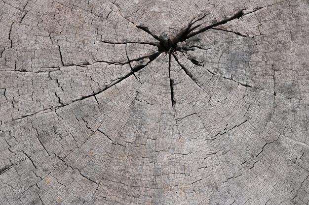 Fundo de textura de tronco de árvore