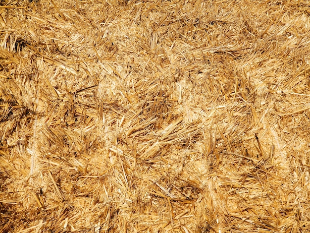 Fundo de textura dourada natural feno palha agricultura