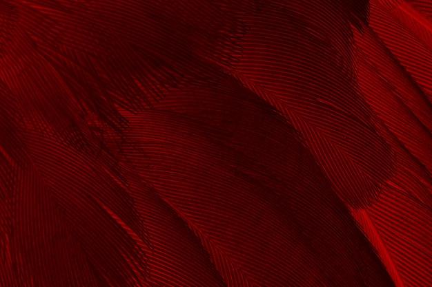 Fundo de textura padrão de penas vermelhas