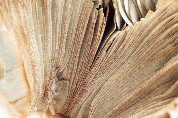 Fundo de textura suja natural abstrato