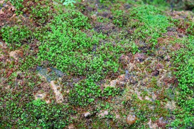 Fundo de texturas de mos. mos verde em fundo de pedra