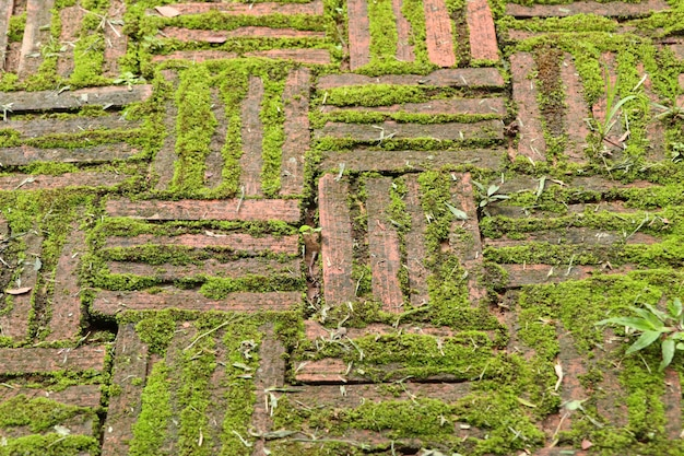 Fundo de tijolo verde musgo