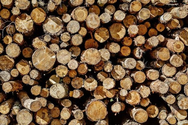 Fundo de toco de árvore, toras em texto de madeira