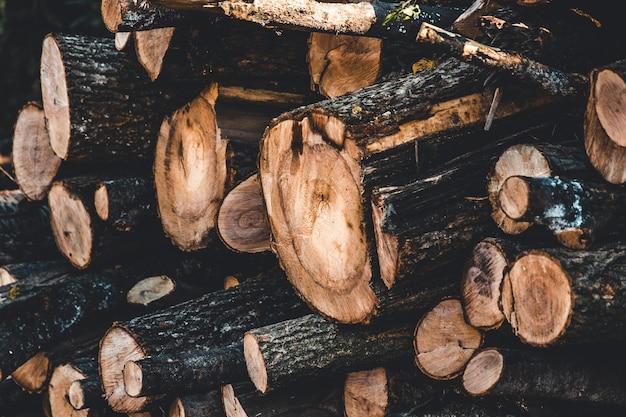 Fundo de toco de árvore