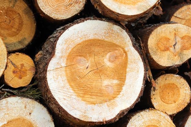 Fundo de toras cortadas com serra, close up, colheita de madeira para a indústria