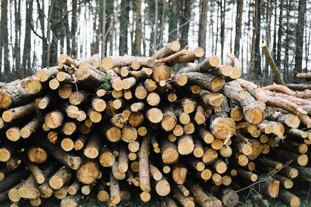 Fundo de toras de corte natural de madeira.