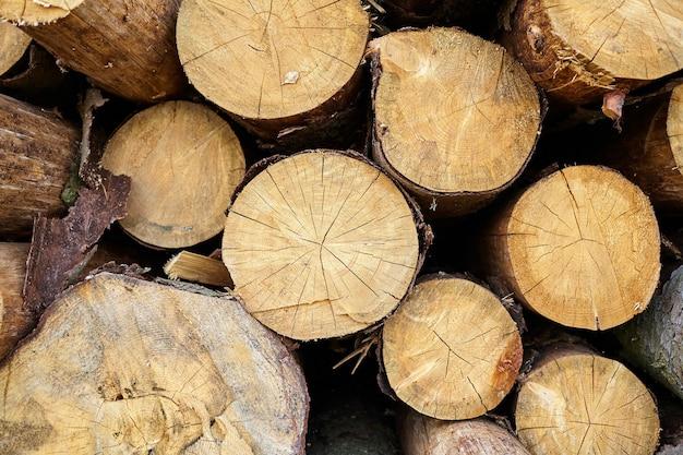 Fundo de toras de madeira com corte redondo