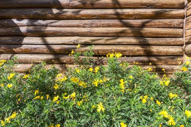 Fundo de toras e flores ao ar livre