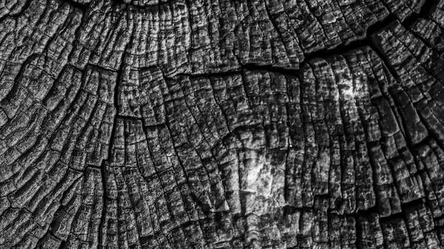 Fundo de tronco texturizado de tronco de árvore