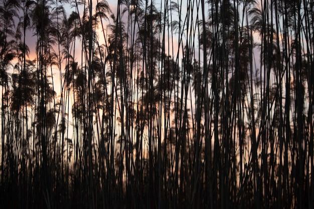 Fundo de troncos de junco bege