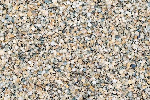 Fundo de um grande número de pequenas conchas.