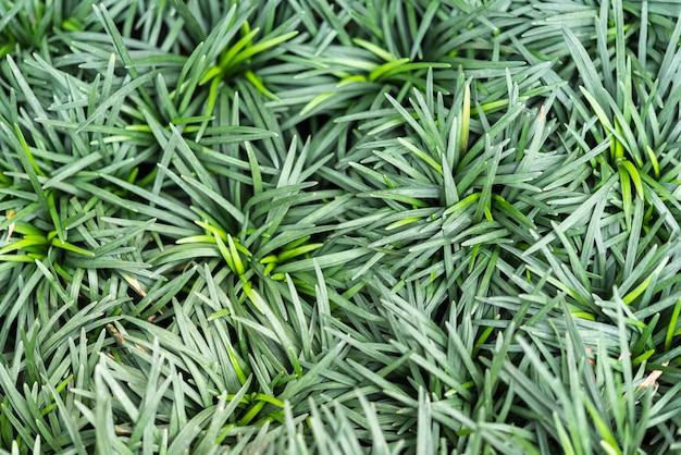 Fundo de vegetação da natureza planta e folha