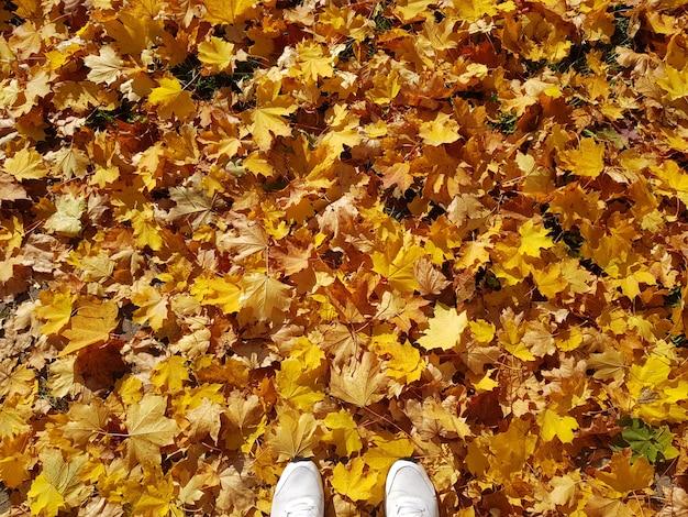 Fundo de venda natural outono com bordo caído