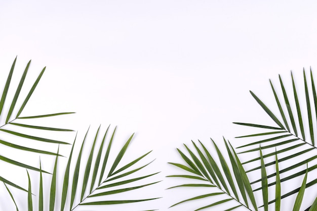 Fundo de verão com folhas tropicais e espaço de cópia em branco