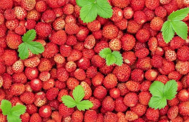 Fundo de verão de morango vermelho e folhas verdes